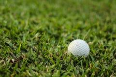 Bolas de golfe na grama verde fotografia de stock royalty free