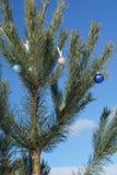 Bolas del azul y del oro de la Navidad en la ramita del abeto Foto de archivo libre de regalías