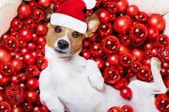 Bolas del perro y de Navidad de Papá Noel de la Navidad como fondo Fotografía de archivo