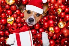 Bolas del perro y de Navidad de Papá Noel de la Navidad como fondo Foto de archivo libre de regalías