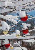 Bolas nevado do Natal Imagem de Stock Royalty Free