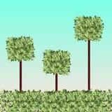 Bolas quadradas da grama Ilustração Stock