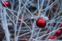 Bolas rojas de la Navidad en las ramas blancas imagen de archivo
