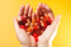 Bolas tecidas pequenas em uma forma do coração fotografia de stock royalty free