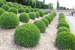 Bolas verdes del jardín en Francia Foto de archivo libre de regalías