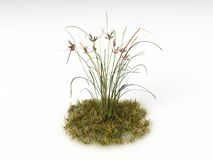 Bolboschoenus maritimus. Render illustration of the Different Plants and Grass Royalty Free Stock Photography