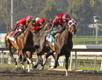 Bold Chieftain Wins The Sunshine Millions Royalty Free Stock Photography