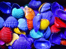 Bold Color Shells. Shells of bold colors for decoration stock photography