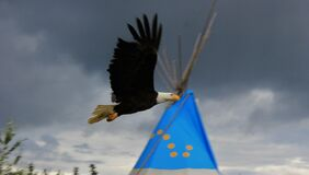 Bold Eagle fly high in the sky