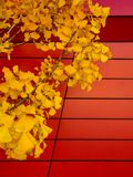 Bold Fall leaves over modern patterned background royalty free stock photography