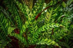 Bold Foliage. Bright green foliage with bold patterns Stock Image