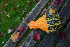 Bold orange and green warty ornamental gourd on bench Royalty Free Stock Image