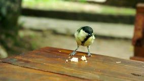 Bold sparrow bird eats bread crumbs on a restaurant table. Plitvice Lakes. Croatia stock footage