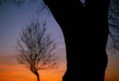 Bold Tree, Subtle Tree Royalty Free Stock Photo