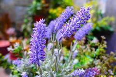 Boleh kwiaty Zdjęcia Royalty Free