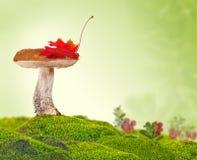 Bolete del abedul con la hoja de arce en musgo verde Imagen de archivo libre de regalías