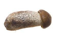 Bolete mushroom. Side view of young bolete mushroom; isolated on white background Stock Photos