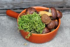 Boletes and moss in terracotta pan. Forest boletes and moss in terracotta pan Royalty Free Stock Photos