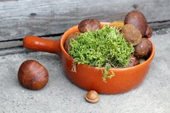 Boletes and moss in terracotta pan. Forest boletes and moss in terracotta pan Stock Photography