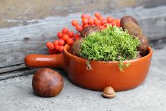 Boletes and rowan in terracotta pan. Forest boletes and rowan in terracotta pan Royalty Free Stock Photography
