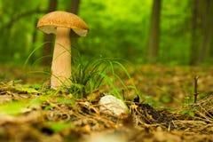 Boleto, cogumelo Foto de Stock Royalty Free
