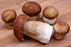 Boleto de cinco cogumelos Fotografia de Stock Royalty Free
