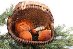 boleto del Anaranjado-casquillo Fotos de archivo