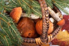 boleto del Anaranjado-casquillo Imagen de archivo libre de regalías