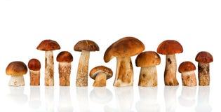 boleto do Alaranjado-tampão e cogumelo do porcini Imagem de Stock