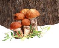 Boleto do cogumelo Imagens de Stock Royalty Free