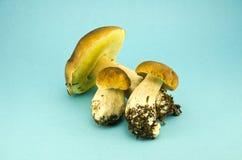 Boleto do tampão de três cogumelos no fundo azul imagem de stock
