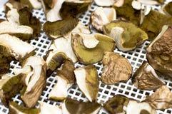 Boletos dos cogumelos e boletes recolhidos do louro Foto de Stock Royalty Free