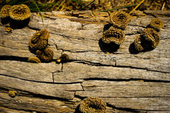 Boletus μανιταριών επάνω στην ξυλεία Μανιτάρια φθινοπώρου στοκ εικόνα με δικαίωμα ελεύθερης χρήσης