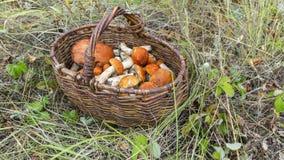 Boletus μανιταριών πορτοκαλής-ΚΑΠ στο καλάθι Στοκ Φωτογραφία