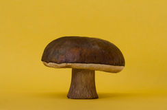 Boletus Royalty Free Stock Image