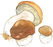 Boletus Royalty Free Stock Photo