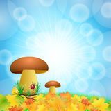 Boletus in autumn in the sun Royalty Free Stock Image