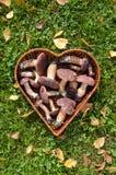 Boletus badius (Xerocomus badius) mushroom in heart form basket. Boletus badius (Xerocomus badius) mushroom in wicker heart form basket Royalty Free Stock Photo