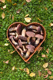 Boletus badius (Xerocomus badius) mushroom in heart form basket Royalty Free Stock Photo