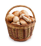Boletus  basket Royalty Free Stock Photo