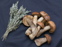 Boletus with a bunch of sage Royalty Free Stock Photos