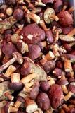 Boletus cep cepe eatable mushroom Royalty Free Stock Photos