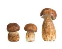 Boletus, cep mushroom isolated on white Stock Photography