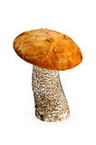 Boletus d'orange-capuchon de champignon de couche Photos stock