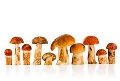 boletus d'Orange-capuchon et champignon de couche de porcini Images libres de droits