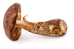 Boletus de capuchon de Brown Photo libre de droits