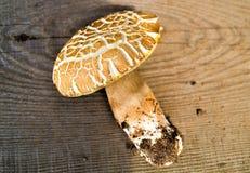 Boletus de champignon au-dessus de fond en bois Images libres de droits