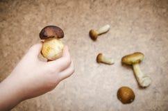 Boletus de champignon dans des mains sur un fond brun Photo libre de droits