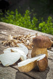 Boletus Edilus mushrooms on a wooden table  – fresh dried and Royalty Free Stock Images