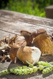 Boletus Edilus mushrooms on a wooden table  – fresh and dried Royalty Free Stock Photo